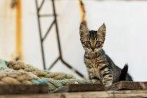 Kaķis, kurš trīsreiz nenoslīka jeb Slaveni mīluļi, ar kuriem lepojas vēsture