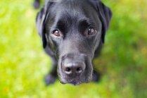 Suņi melnā: mīluļi ar tumšu kažociņu, kas savaldzinās ikvienu
