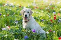 Atpūta ar suni dabā: kas jāzina atbildīgam saimniekam