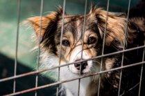 Veterinārārsti iesaka pārliecināties, ka arī no patversmes paņemtais suns ir reģistrēts datubāzē