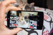 'Beidz mani fotografēt!' Frāzes, ko pelnījis dzirdēt ikviens kaķa saimnieks