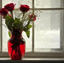 Вырастить Розу Из Букета Дома Пошаговое
