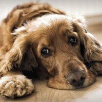 Собаки-заболеваки: 10 самых распространенных проблем со здоровьем у собак