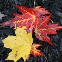 Укрываем растения на зиму в октябре