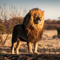 Топ-8 диких животных, которые чаще всего нападают на людей — и как от них защититься