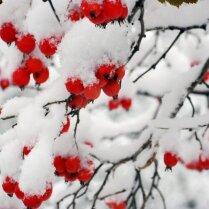 """10 способов """"раскрасить"""" зимний сад"""