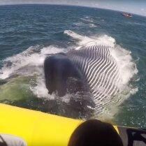 ВИДЕО: В Канаде огромный кит до смерти напугал туристов, проплыв под их лодкой