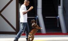 Hamiltona suņa bilde nosolīta par trim tūkstošiem mārciņu