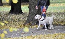 Suns-pavadonis Teodors un redzes invalīdi piedalīsies 'Lattelecom' Rīgas maratonā
