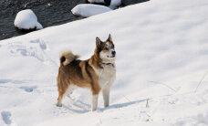 Vičakos sniega biezums pārsniedzis pusmetru