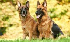 Valsts policijai izdevies pārdot divus dienestam vairs nederīgos suņus