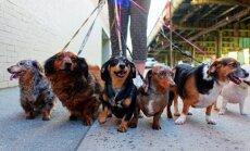 Спорный вопрос о чипировании собак все же направлен на рассмотрение правительства