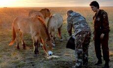 ВИДЕО: Путин ведром овса выманил в степь стадо лошадей Пржевальского