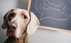 Aktuāli jautājumi par suņiem, kuri palīdzēs atšifrēt neskaidrās darbības