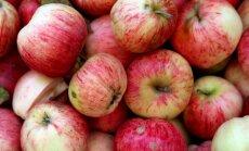FM un EM neatbalsta PVN samazināšanu Latvijas augļiem un dārzeņiem