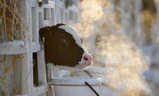 ZM bažas par piena cenas 'burbuli' uzskata par priekšlaicīgām