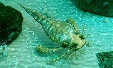 Ракоскорпионы и метеориты: как Турайда ищет новые приманки для туристов