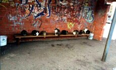 Foto: Muceniekos runči rāmi gaida 16. autobusu
