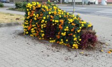 Vandāļi Ventspilī apgāzuši pilsētas centrā izvietotās ziedu kastes un dekorus