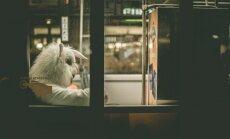 Rīgas sabiedriskajā transportā balto lāci nomainīs studentu veidoti video