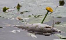 В Слоцене снова обнаружена мертвая рыба: жителей призывают ее не трогать