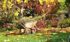Kas darāms dārzā no 16. līdz 23. oktobrim?