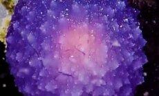 На дне Тихого океана найден загадочный пурпурный шар