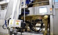 Foto: Lēdurgas fermā par 3 miljoniem veic uzlabojumus un iepērk govju slaukšanas robotus