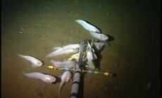 Video: Nofilmētas visdziļākajā okeāna dzelmē dzīvojošas gliemjzivis