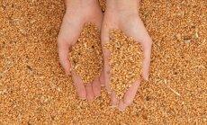 Madonas novadā kaltes bunkurā deg graudi