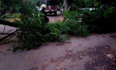 Foto: Iļģuciemā koks uzgāžas automašīnai