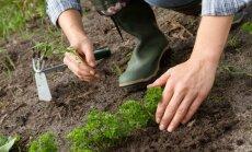 Nezāles dārzeņu dobē: apkarošana un profilaktiskas metodes