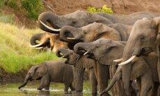 10 interesantas dokumentālās filmas par dabu un dzīvniekiem