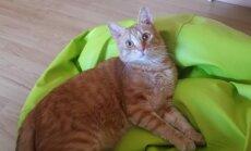 Kaķis piecus mēnešus 'slēpj dzimumu'; veterinārārsts to pat nenoskaidro