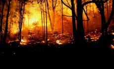 Spānijā izdevies ierobežot plašo mežu ugunsgrēku, kurā gājuši bojā četri cilvēki