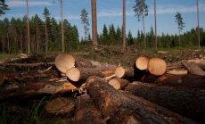 Laikraksts: mežizstrādē pērn rekordu gads