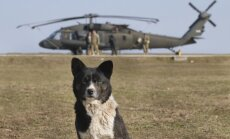 ASV aicina NATO valstis ātri izstrādāt plānus aizsardzības izdevumu palielināšanai