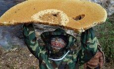 Neparasti kadri: vietējie, spītējot dzīvības briesmām, dodas pēc medus Nepālā