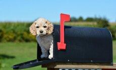 Suņi joprojām apdraud Latvijas pastnieku drošību