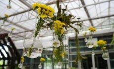 Svečturi un ziedu kompozīcijas: burvīgas stikla trauku izmantošanas variācijas