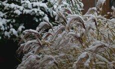 Svētdien dažviet nedaudz snigs