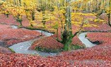 Basku zemes pērle - gleznainais Gorbea dabas parks