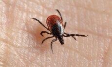 Pārbaudītas jau 37 iedzīvotājiem piesūkušās ērces; vienai konstatēts encefalīts