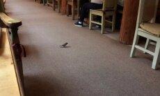 Video: Putniņš Krasta ielas 'Lido' ielido paēst