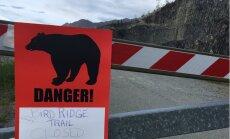 Aļaskā lācis nogalina 16 gadus vecu skrējiena dalībnieku
