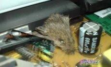 Printerī atrod beigtu peli