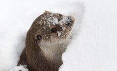Otrdien austrumdaļā snigs; ceļi būs slideni
