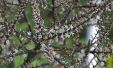 Daba mostas – pirmās pavasara vēsmas Salaspils botāniskajā dārzā