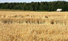 Krievija graudu eksportu pagaidām neierobežos