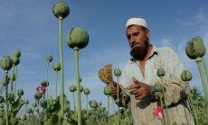Opija ražošana Afganistānā pieaugusi par 87%